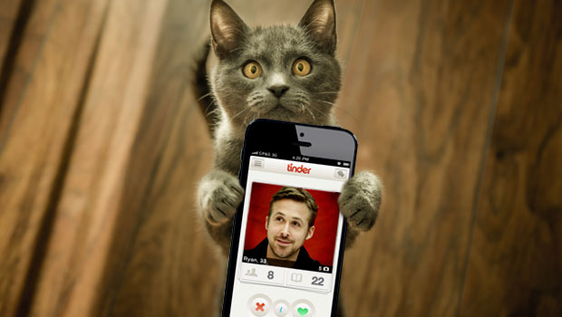 Cat holding tinder phone