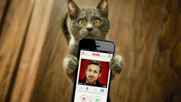 Cat holding tinder phone